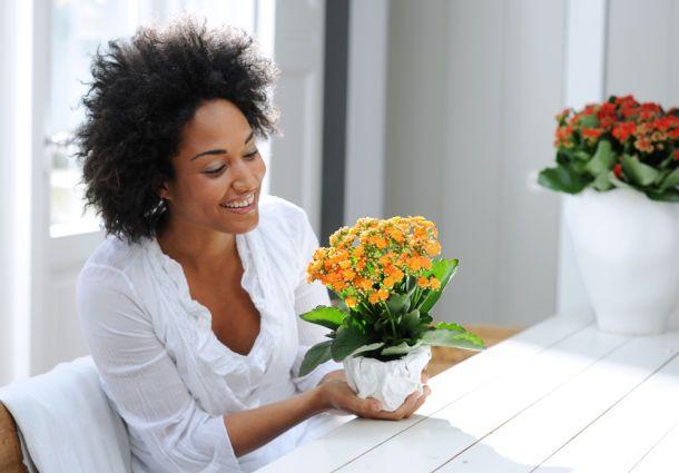 robuste zimmerpflanzen f r vergessliche. Black Bedroom Furniture Sets. Home Design Ideas