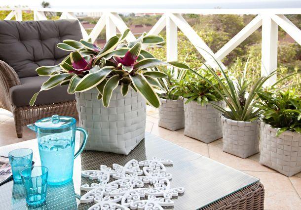 Dschungel flair im wohnzimmer exotische zimmerpflanzen for Zimmerpflanzen wohnzimmer